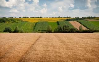 Выделение земельного пая в натуре: правила и порядок процедуры