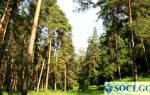 Как получить от государства лес бесплатно?