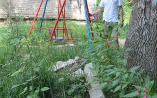 Двор зарос травой: что делать?